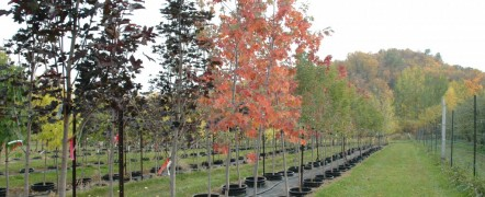 125 Species of Broadleaf Trees